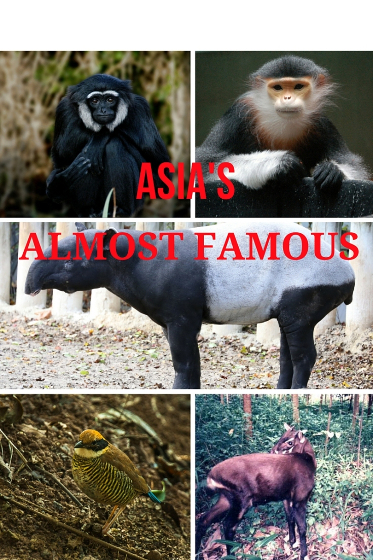 ASIA'S ALMOST FAMOUS